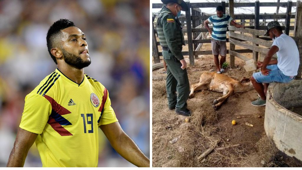"""Un internacional colombiano denuncia la violación de su vaca por parte de un grupo de jóvenes: """"Esperemos que Dios meta mano para que se recupere"""""""