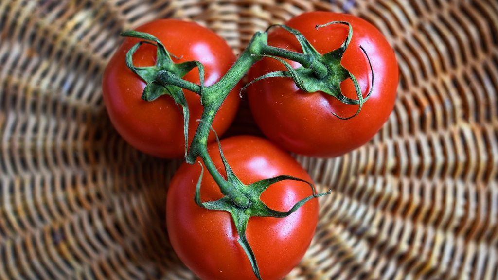 Tres tomates en rama