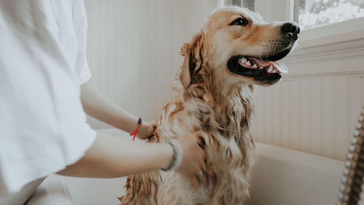 Claves para bañar a tu perro sin montar un drama