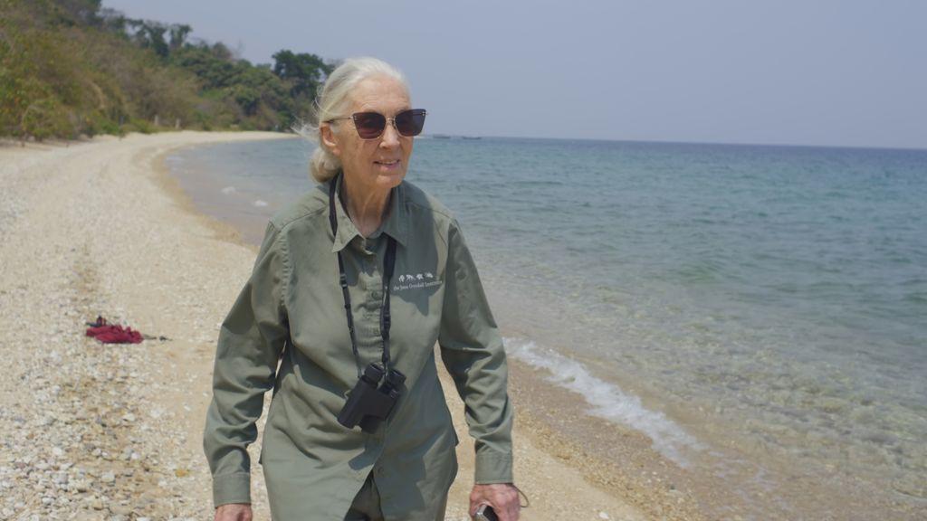 """Jane Goodall: """"Nuestra falta de respeto a los animales ha causado la pandemia"""""""