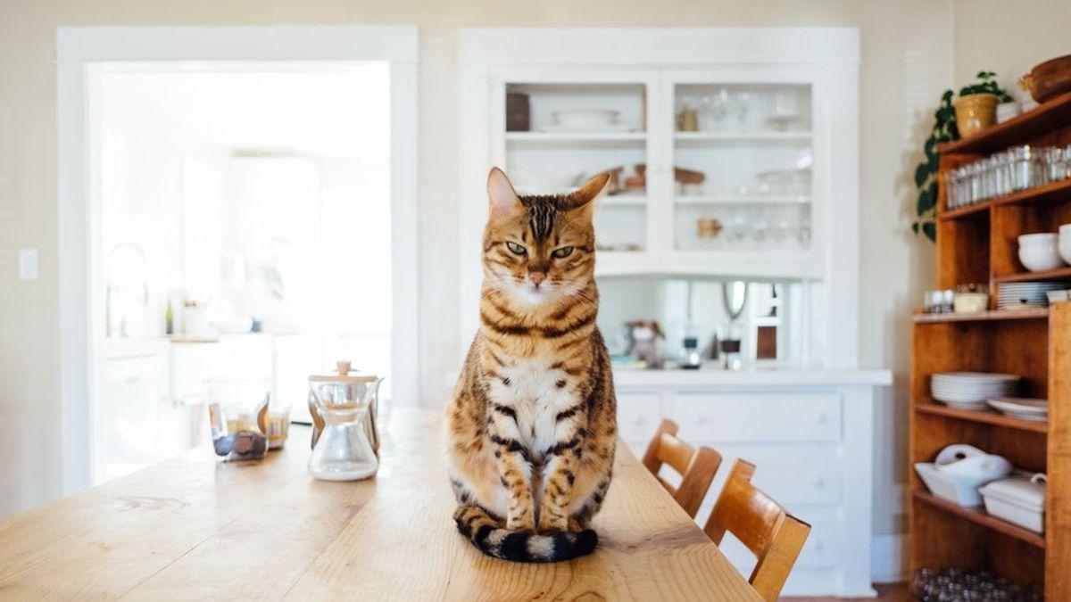 El lenguaje secreto de los gatos: puedes llegar a entenderles con un poco de atención