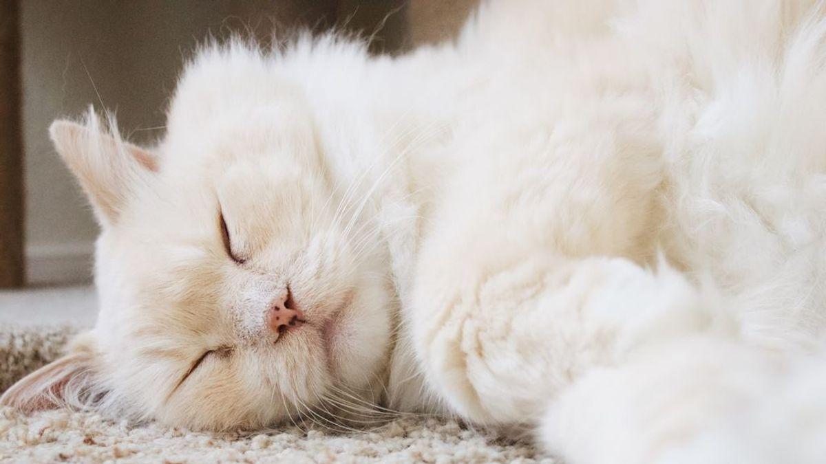 """""""Mi gato está gordo"""": cómo ayudarle a bajar de peso y mejorar su salud"""