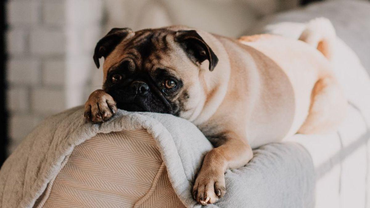 Evita los mordiscos de tu perro: si entiendes sus motivos, tendrás mucho camino ganado