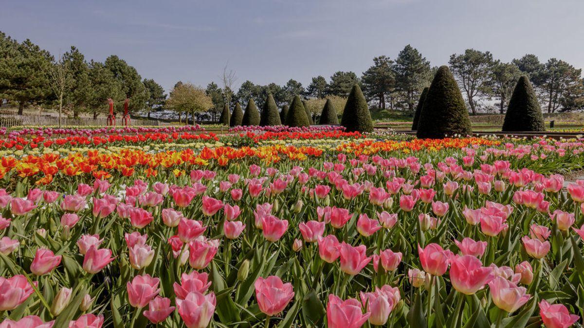 Festival de los Tulipanes