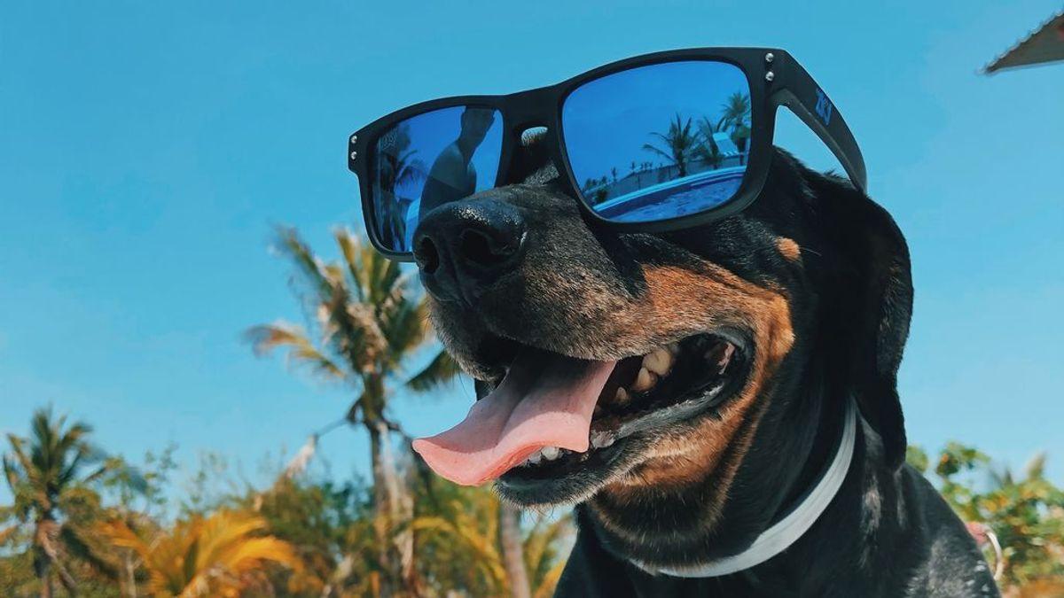 Gafas de sol caninas: cuándo es necesario ponérselas a tu perro