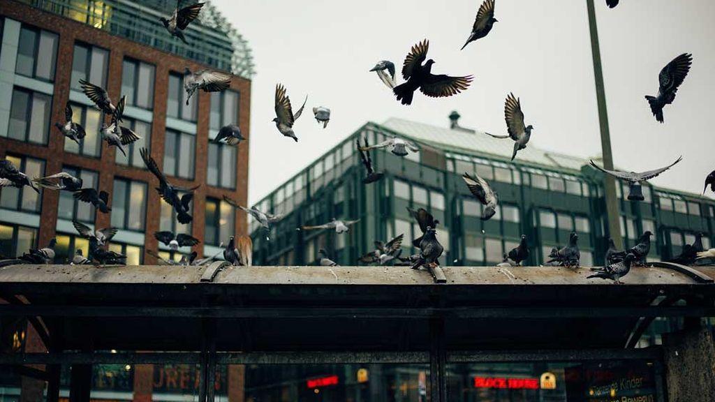 Palomas, en Berlín