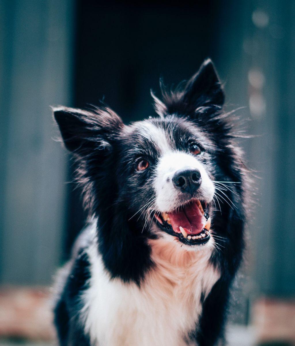 ¿Quieres adoptar a un perro tras la jubilación? Esto es lo que tienes que hacer