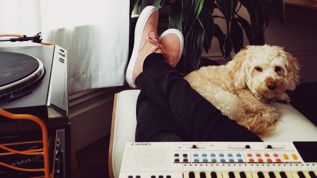 Que no pare la música: las mejores emisoras de radio para escuchar con tu perro