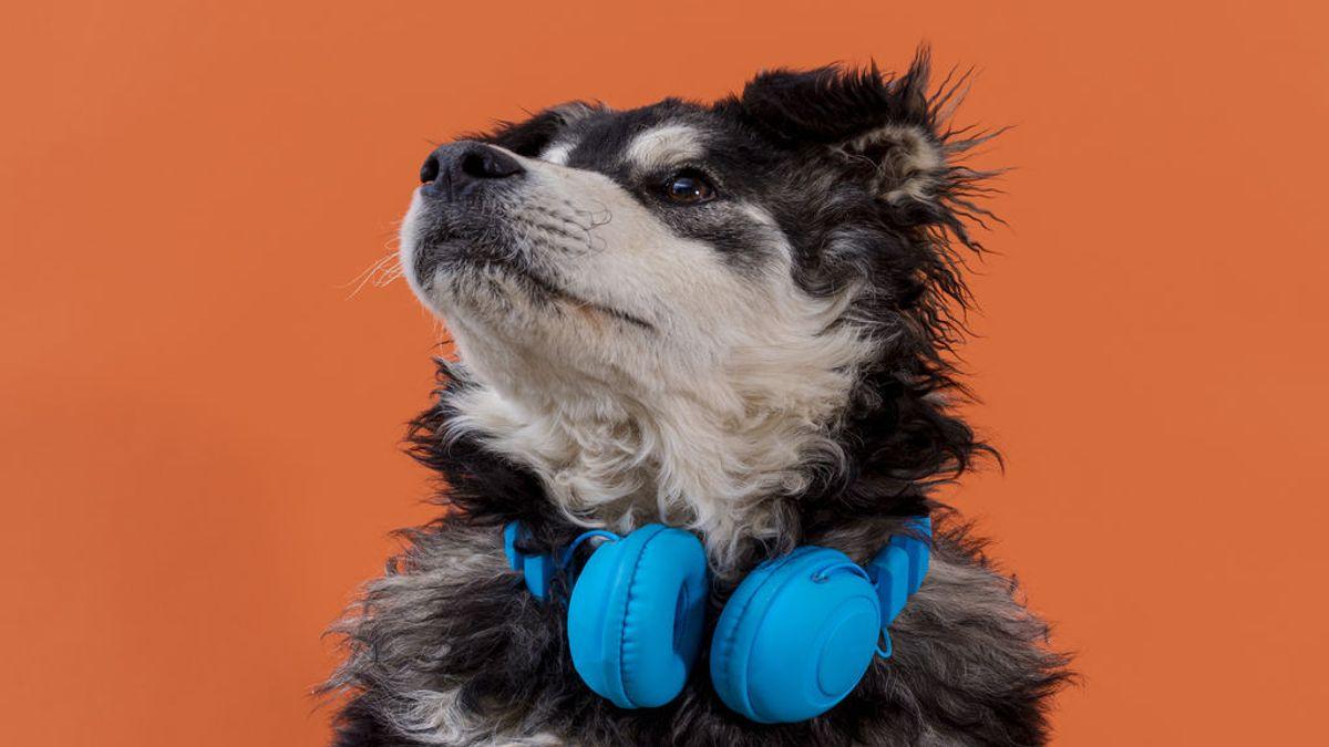 La música clásica amansa a las mascotas y el heavy metal las agita