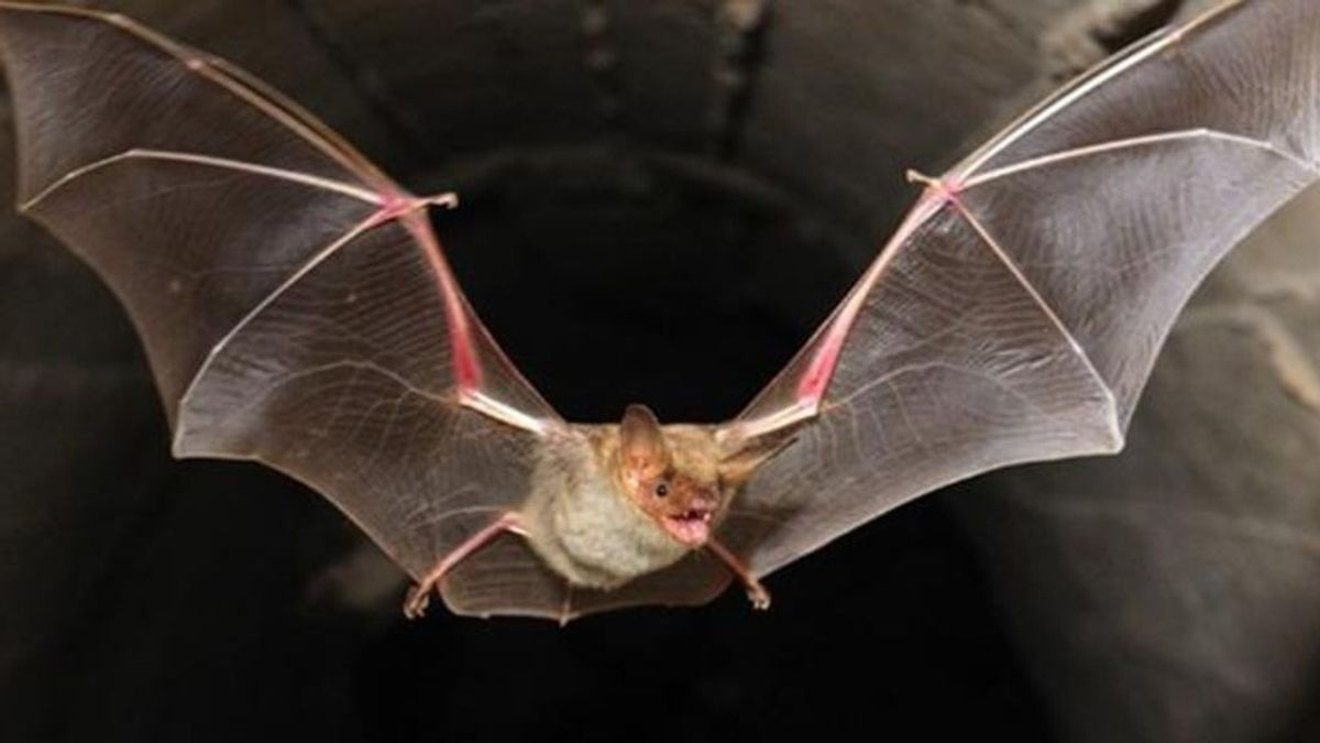 Detectados 500 nuevos coronavirus en varias cuevas de murciélagos de China