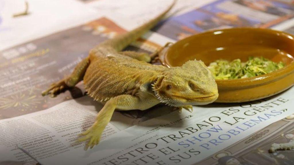 Reptiles, comida basura y adicción a las pantallas: Julio armas descubre el caos que reina en casa de Óscar