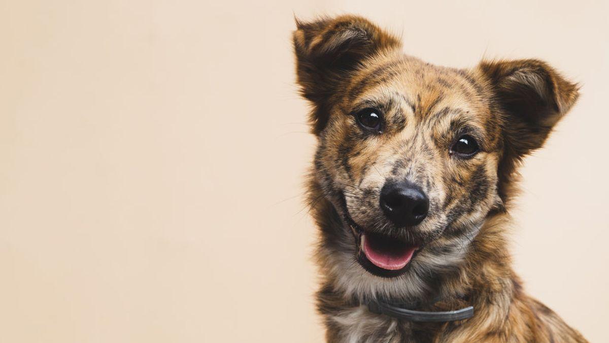 Vacunas, antihistamínicos o lociones: prevenir la alergia de los perretes está al alcance de tu mano