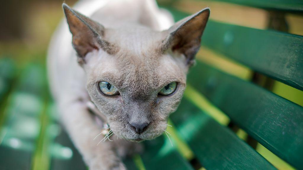 """""""Mi gato me ofrece animales muertos"""": qué significa ese gesto y porque no hay que tener miedo"""