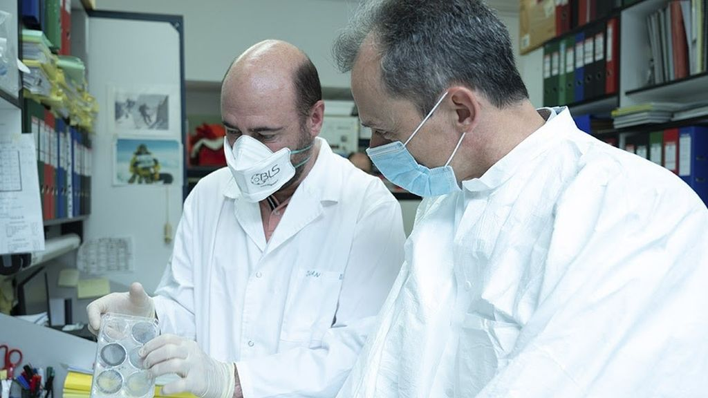 Investigadores del CSIC ensayarán con animales la vacuna contra el coronavirus la próxima semana