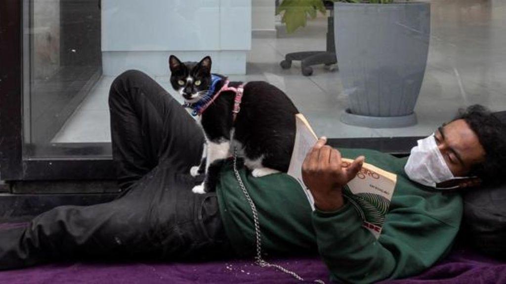 Francia recomienda a los enfermos de COVID-19 limitar el contacto con sus gatos