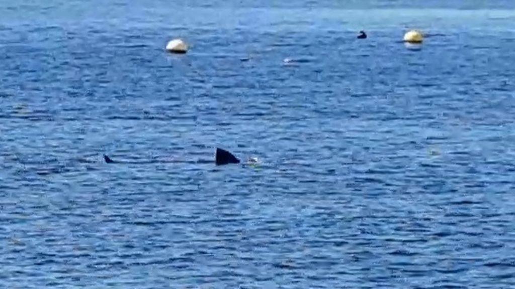 Aparece un gran tiburón cerca de la orilla de la playa de Calahonda al no haber nadie en el agua