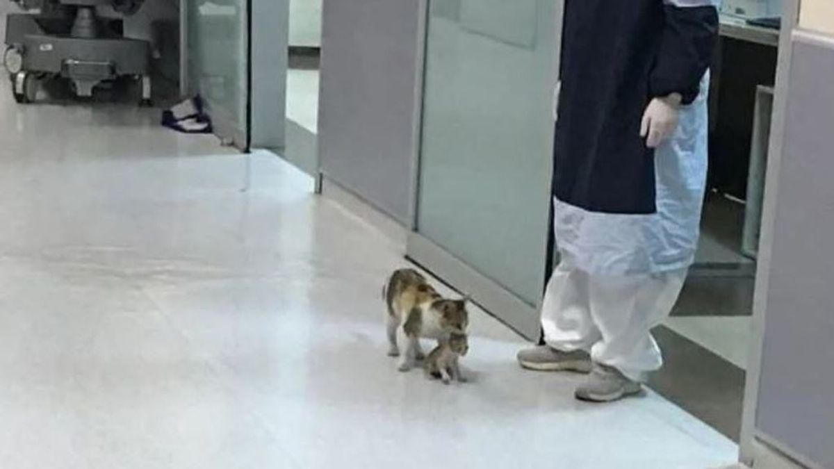 Una gata lleva a su cría enferma a un hospital y espera a que la atiendan