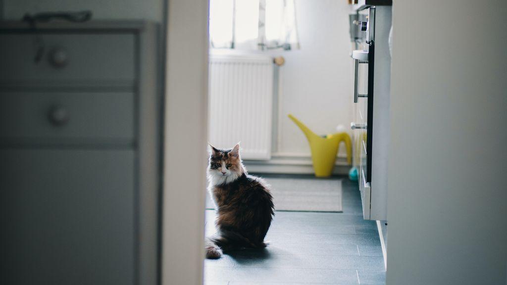 Curiosidad, necesidad de control... las razones por las que tu gato siempre te acompaña al baño