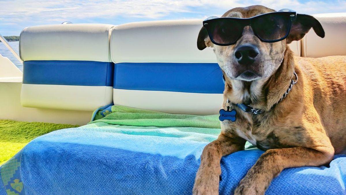 Ofrecer unas vacaciones de ensueño a tu perrete es posible gracias a los hoteles caninos