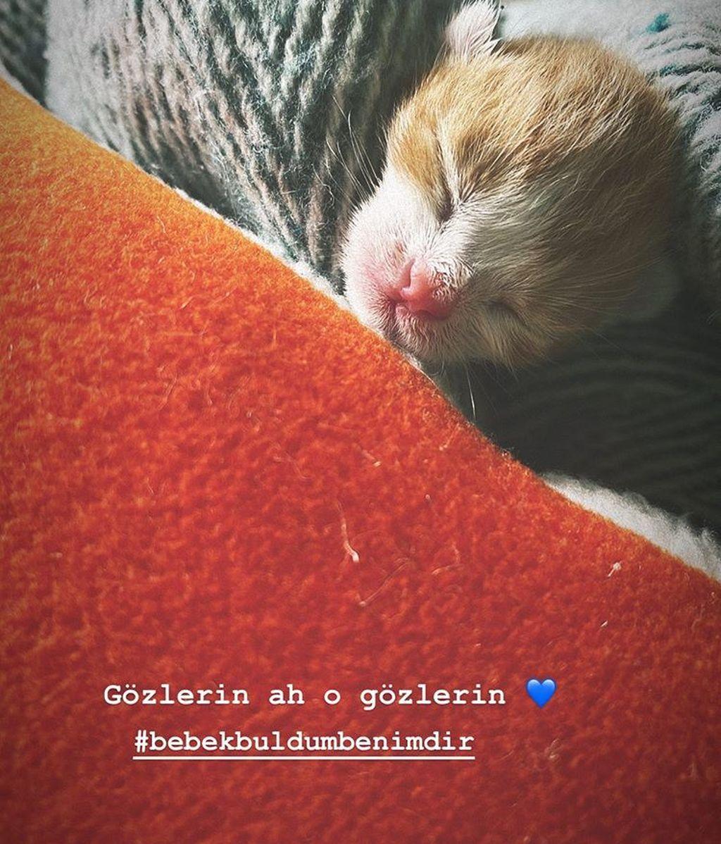 El gato de Demet Özdemir