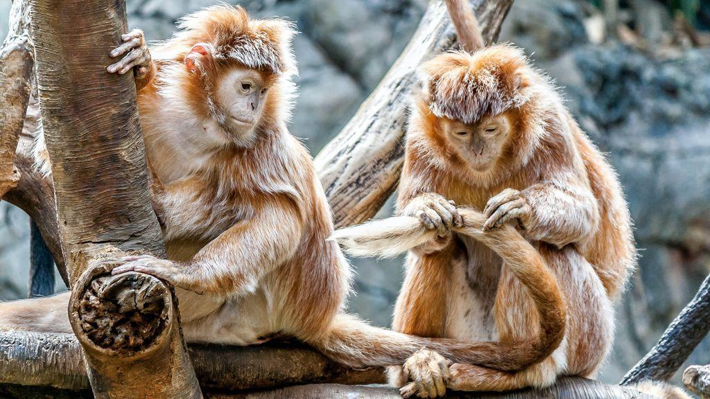 Más por instinto de supervivencia que por romanticismo: los 10 animales más fieles a su pareja