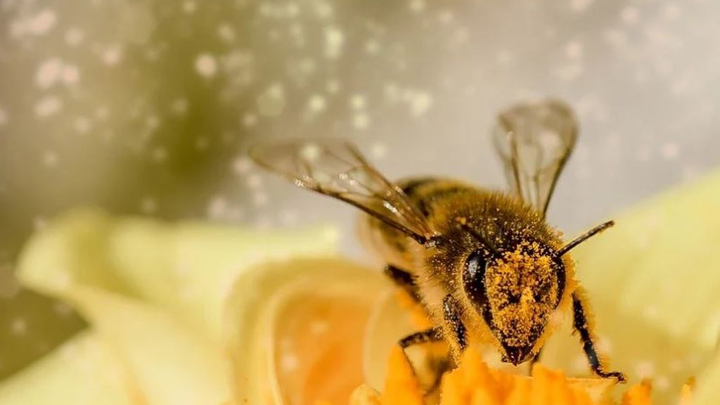 El polen repunta tras las lluvias y el calor: las zonas donde los niveles están por las nubes