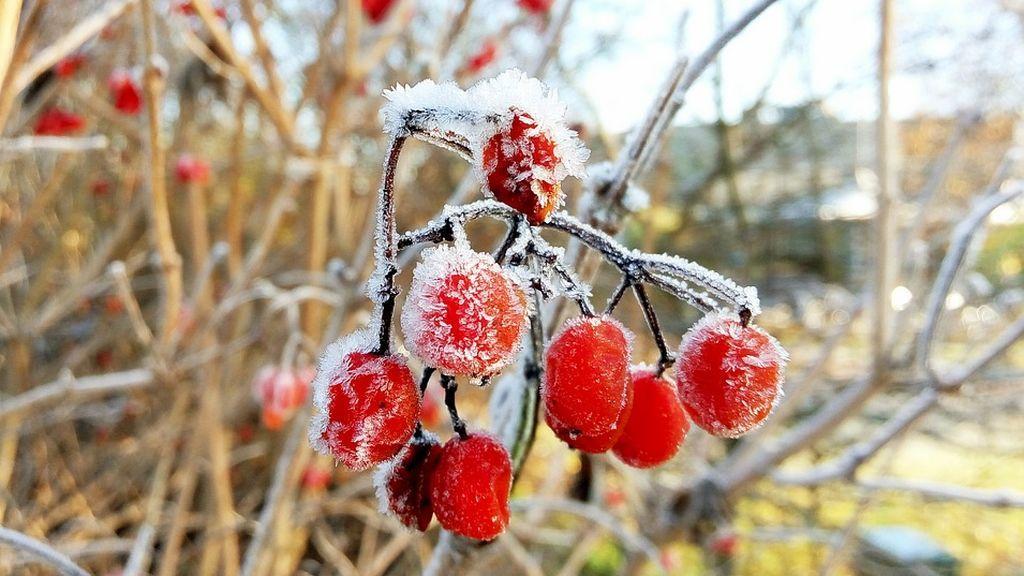 Los Santos del hielo: el periodo más temido en el campo que llega la semana que viene