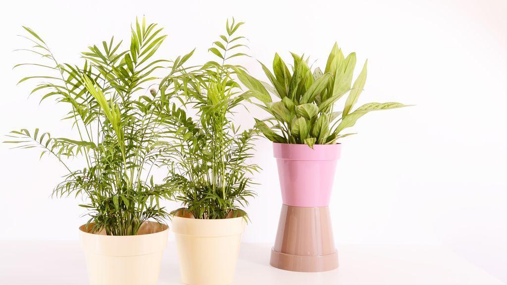 No más muertes de plantas en casa, pásate a las flores secas de plástico y otras opciones para olvidarte de regar