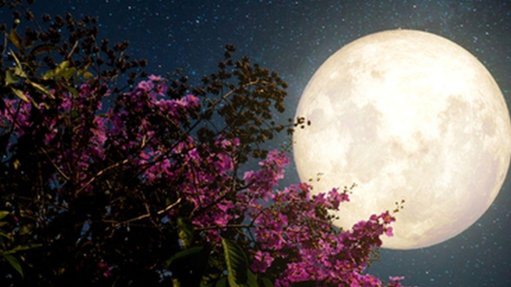La historia de la Superluna de las flores: la última de 2020 que se puede ver hoy