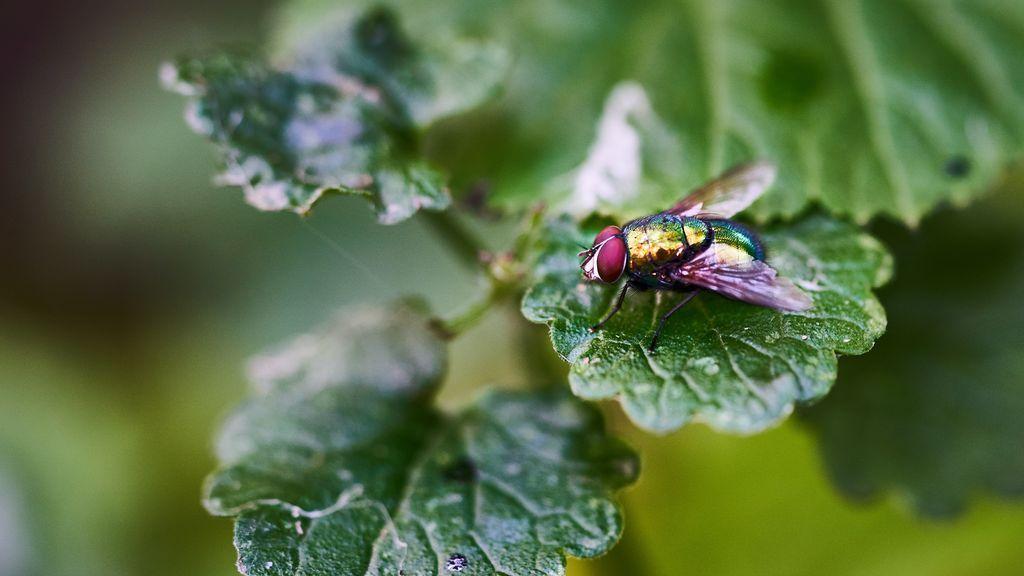 plagas de insectos en las ciudades