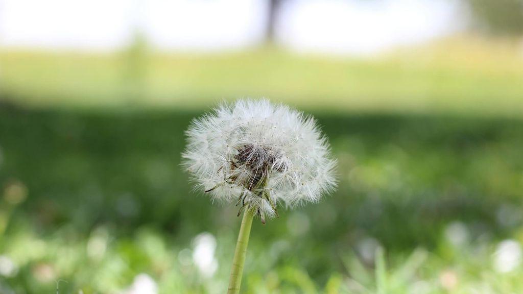 Cuando las alergia pueden provocar asma: asma alérgico