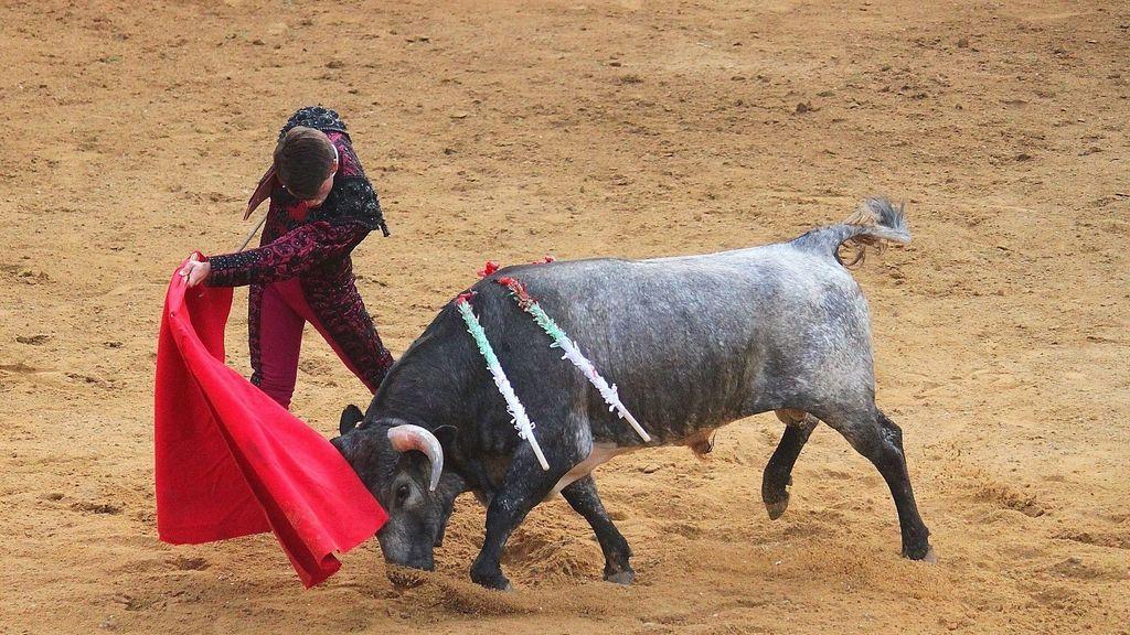 Investigan una novillada que se celebró en fase 0 en Segovia, descubierta por las redes sociales