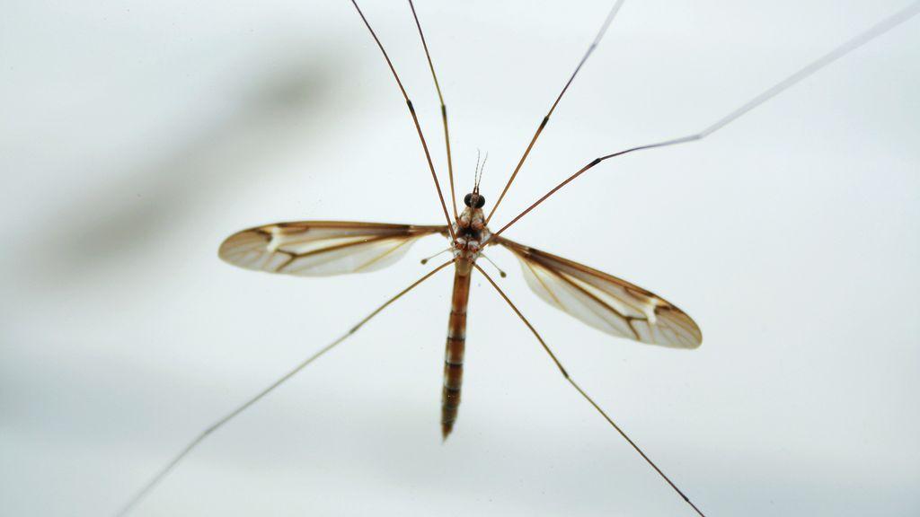 Los mosquitos enseñan a volar a los drones en plena oscuridad sin chocar contra el suelo o las paredes