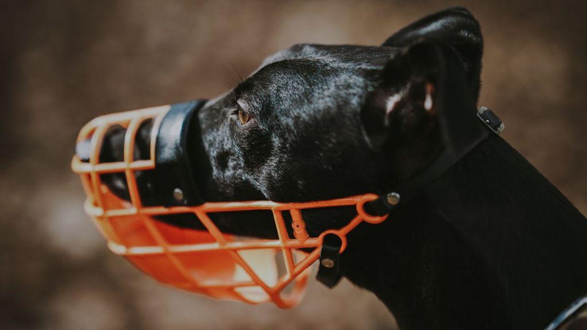 En determinadas circunstancias y situaciones,  los perretes pequeños también deben llevar bozal