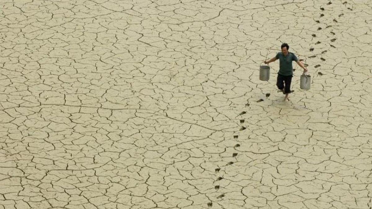 El calentamiento global aumentará la prevalencia de patógenos en el suelo