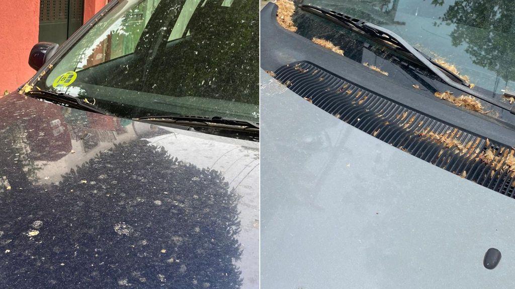 Coches que dan asco tras dos meses aparcados: por qué es escencial limpiar ya el excremento de pájaro