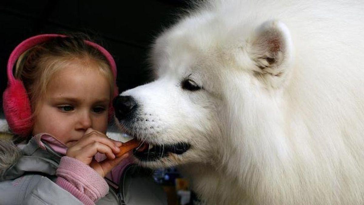 Un perro, al igual que un ser humano, podría experimentar cambios en su carácter durante su adolescencia