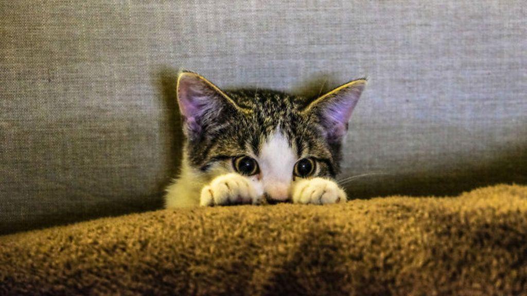 Calma, empatía y mucha paciencia:  conseguir que tu gato se fié de ti requiere un tiempo de adaptación