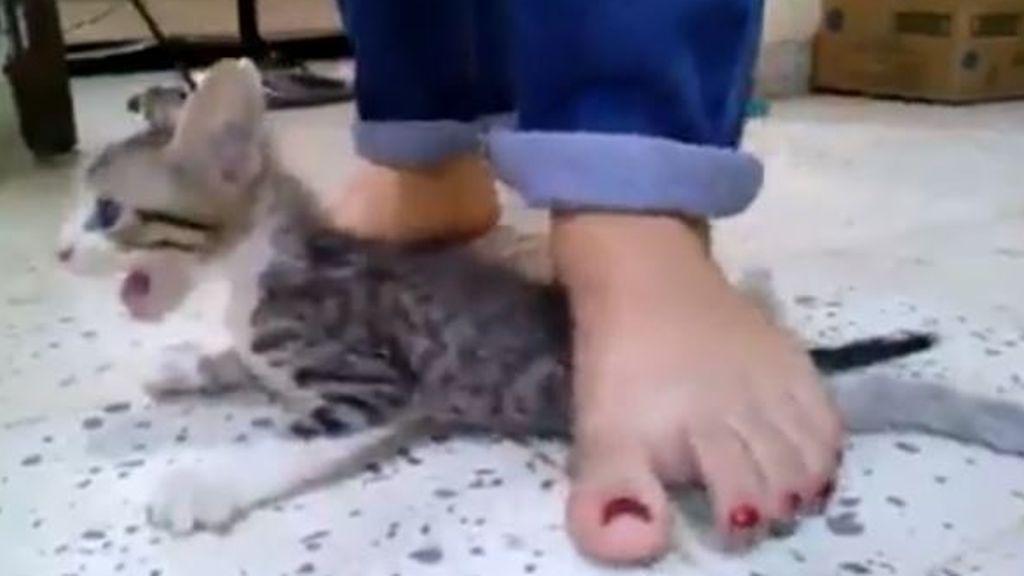 Tres niñas matan a pisotones a un gatito para cumplir un reto viral e indignan a todo el mundo