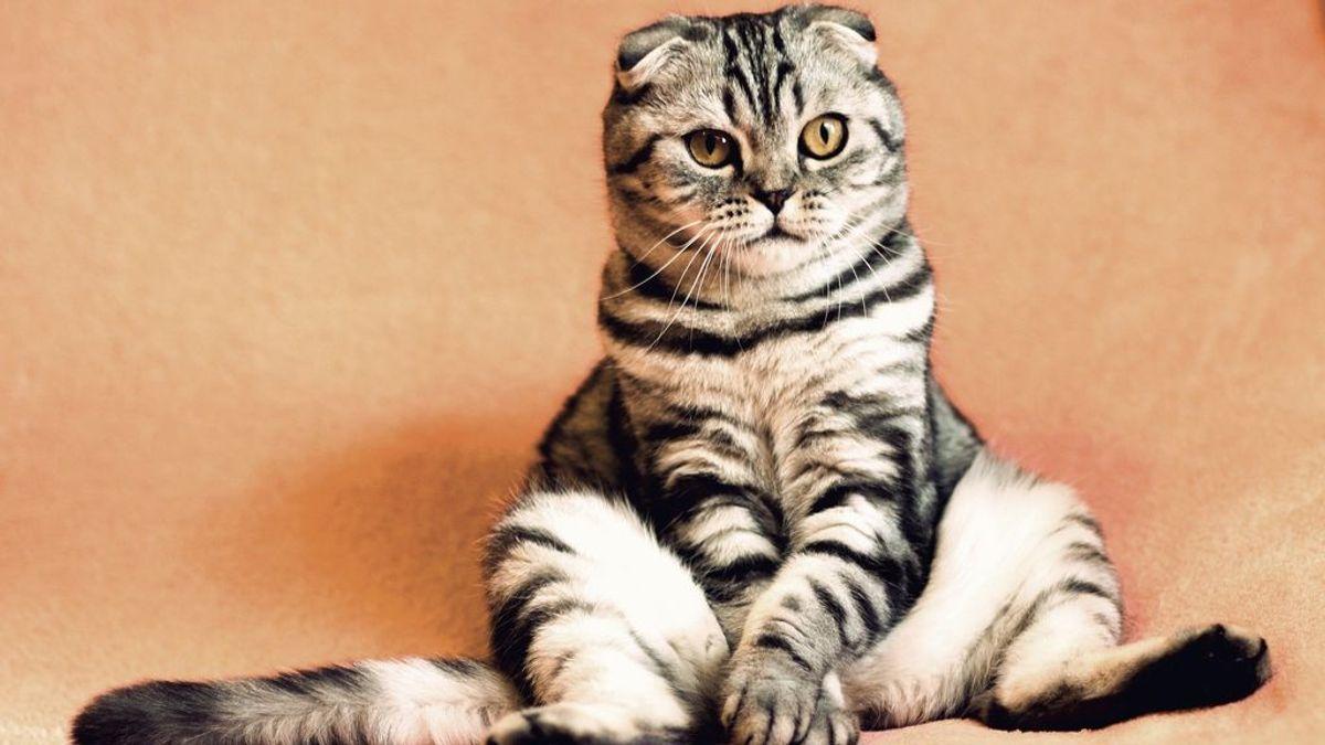 Los gatos domésticos no son lo que parecen: son verdaderas máquinas de matar, según un estudio