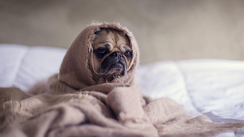Ansiedad canina: causas, síntomas y cómo prevenirla o tratarla