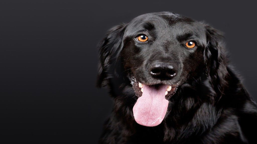 perros-terapias