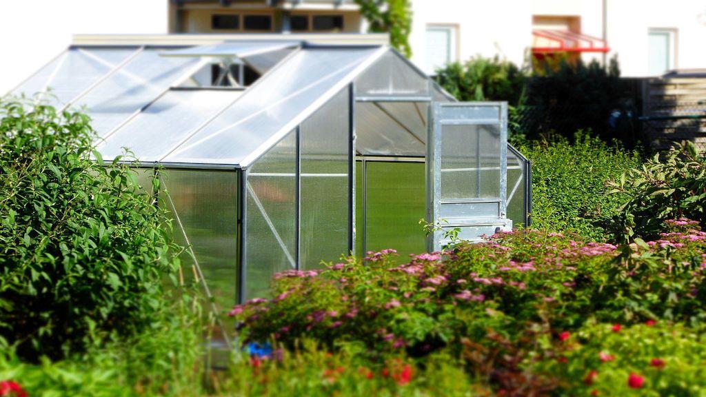 Todo lo que debes saber para crear tu primer invernadero casero