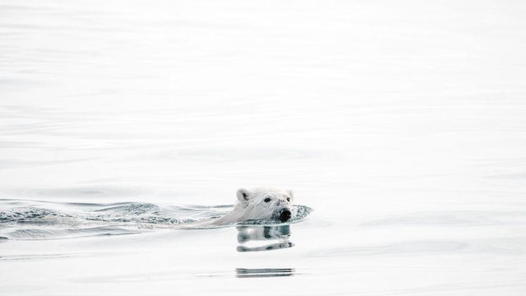 Ola de calor en el Ártico: la temporada de deshielo empieza antes de tiempo