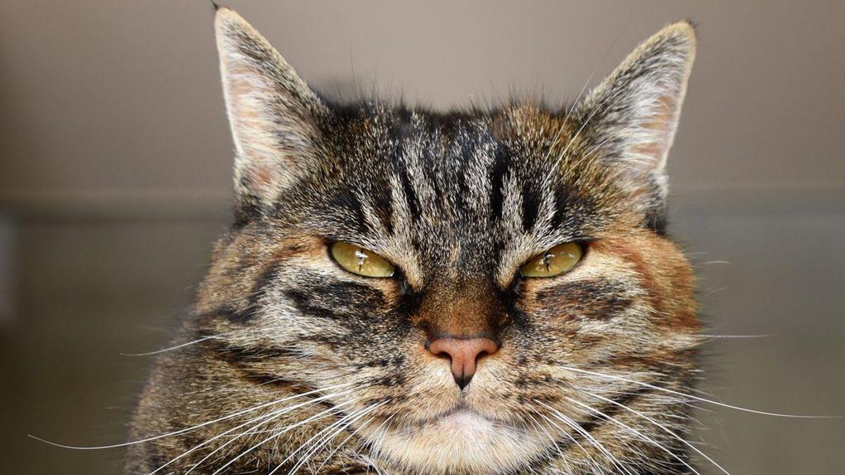 Cuarentena con mascotas: cómo saber si tu gato siente que invades su espacio