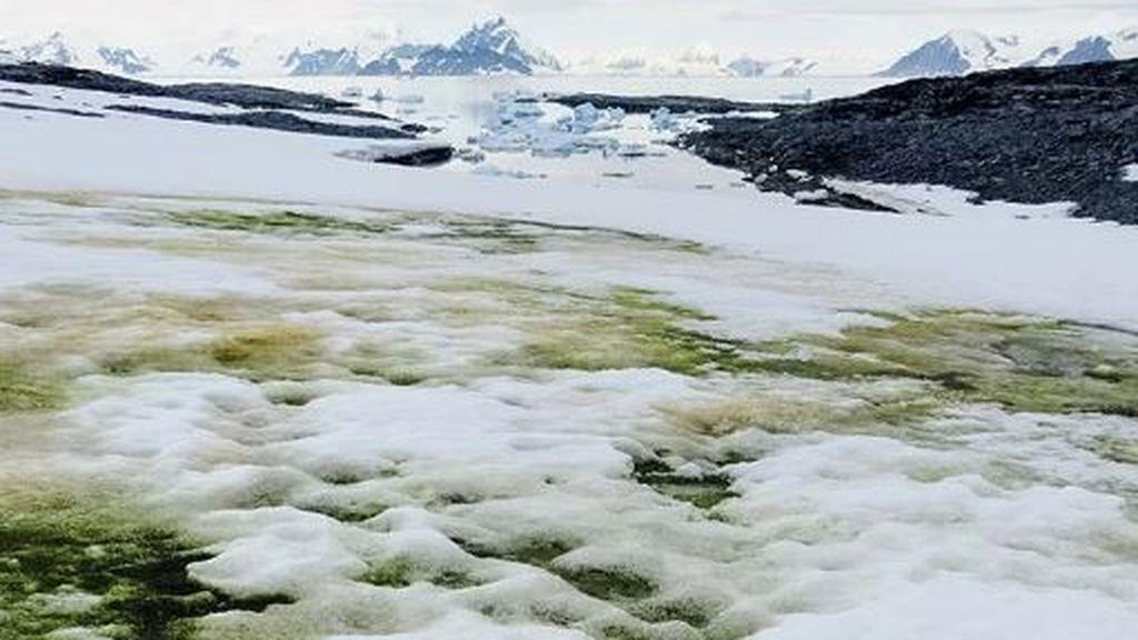 Nieve verde: un estudio analiza el 'tinte' de la Antártida