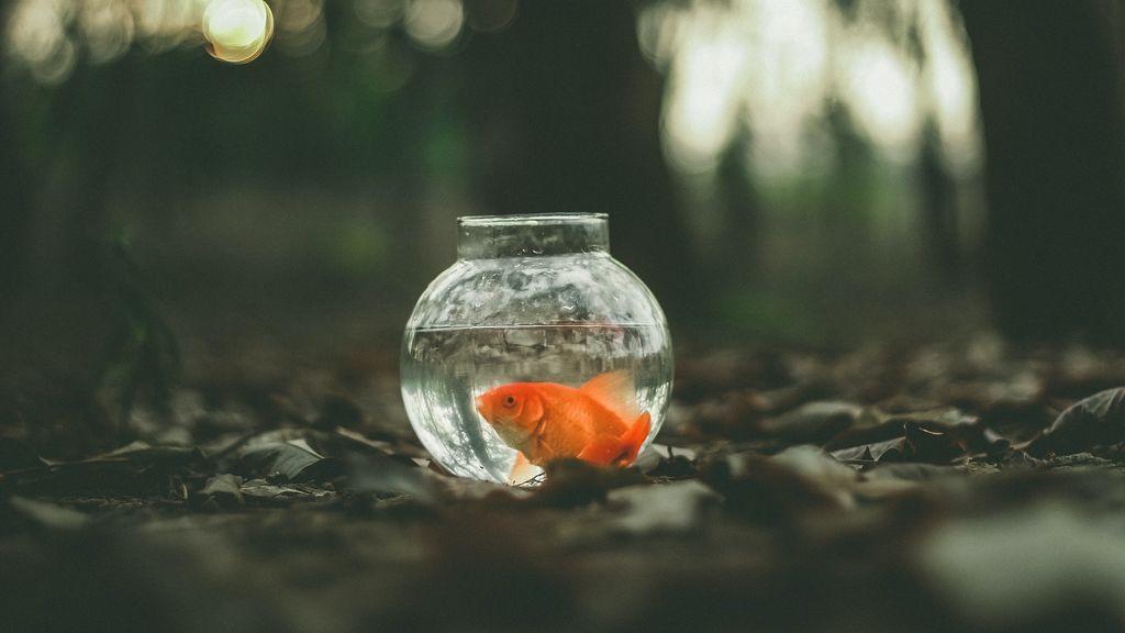 """""""Mis peces se mueren y no sé por qué"""": trucos y cuidados para evitarlo"""