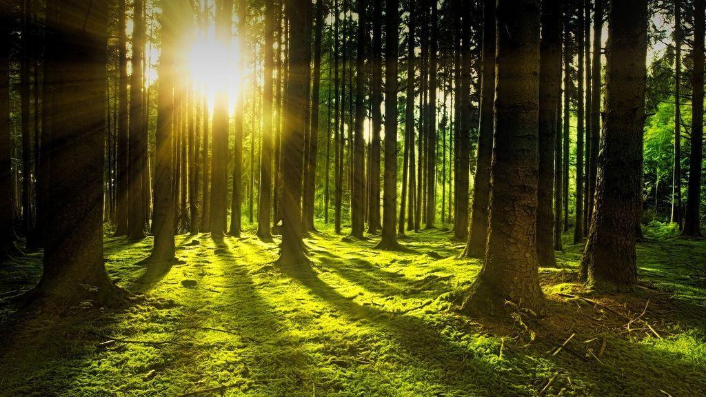 Sensibilidad a la luz: conoce la fotofobia, sus causas y cómo afrontarla