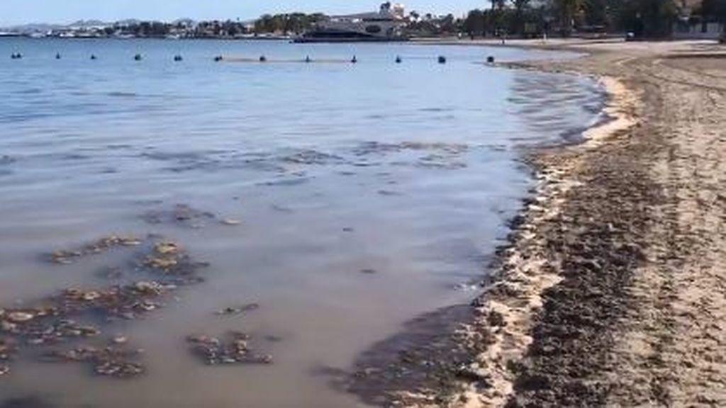 Reabiertas las playas del Mar Menor: los vecinos denuncian su lamentable estado