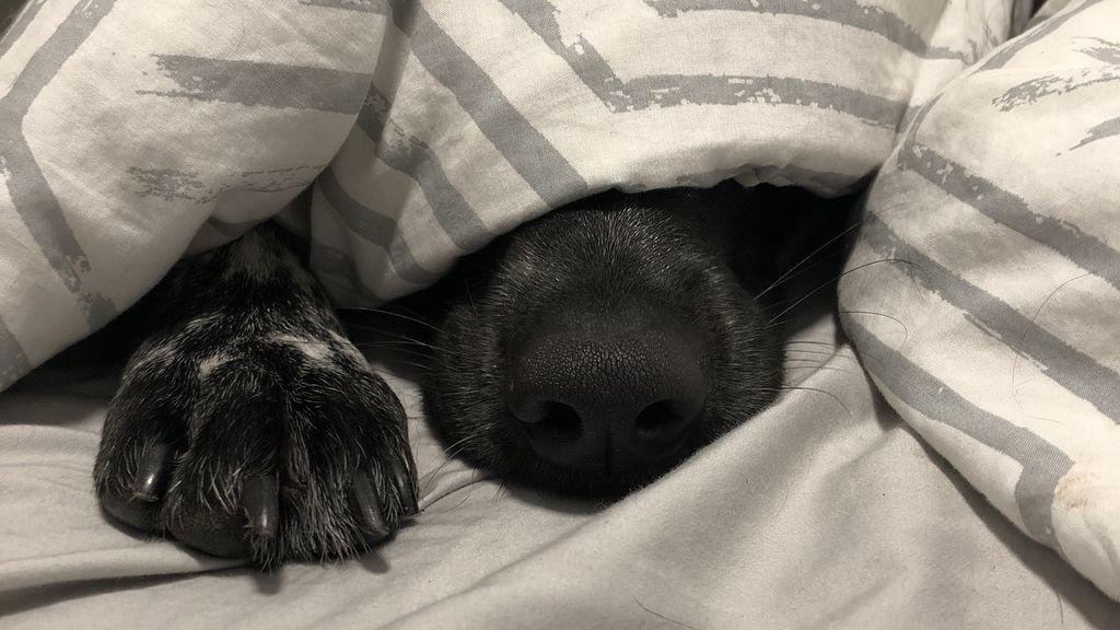 Existen diferentes motivos por los que tu perrete se esconde debajo de la cama e identificarlos es mas fácil de lo que crees
